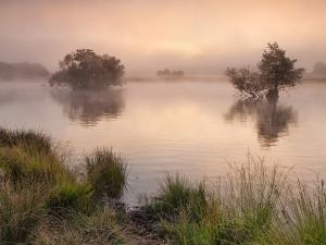 Ponds of Richmond Park (London)