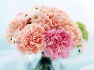 Carnations bouquet of pastel colors