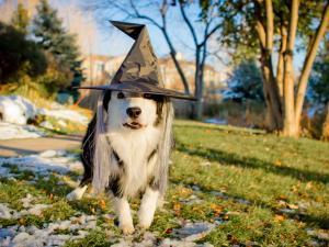 Dog celebrating Halloween