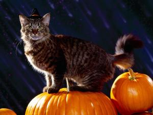 Cat ready for Halloween