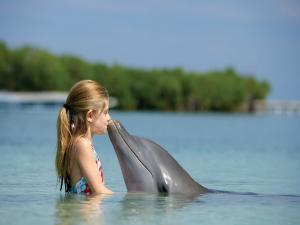 Girl playing with a dolphin