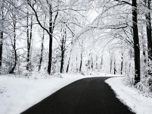 Road going through a snowy forest