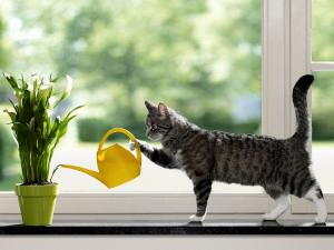 Cat watering the plants