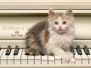 Kitten over the keys of a white piano