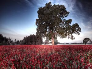Majestic tree upon a bed of red flowers