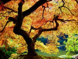 Light filtered through the yellow leaves of a tree