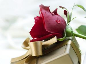 A gift and a rose