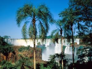 Palm trees near the Iguazu Falls (Argentina)