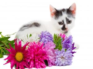 White kitten with black spots alongside some flowers