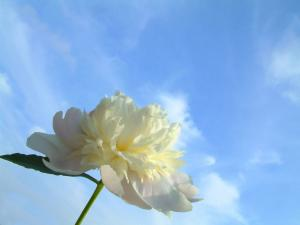 A white flower looking at the sky