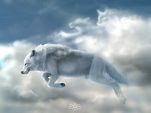 White wolves in the heaven