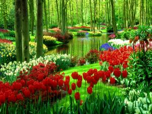 Keukenhof, also known as the Garden of Europe (Lisse, Netherlands)