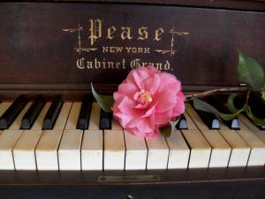 A flower over the keys of an old piano
