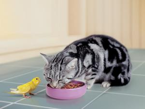 A parakeet and a cat as good friends