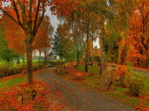 Autumn landscape with the trees leaves fallen
