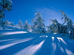 In the shadow of a snow-covered pinetrees