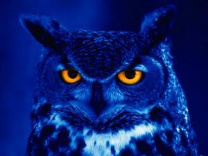 Blue owl with orange eyes