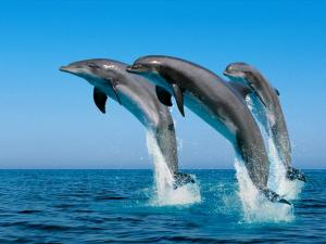 Jump of three dolphins