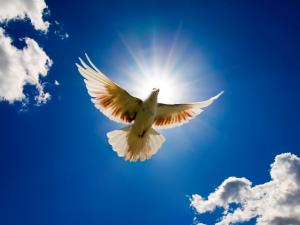 A white dove flying under a blue sky