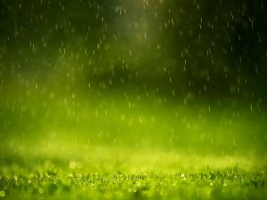 Raining on the grass