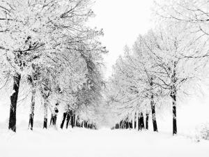 Trees resisting winter