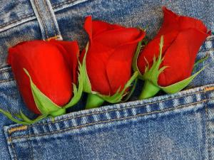 Three roses in the pocket of a jeans