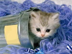 Kitten inside a bucket