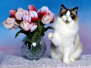 Cat beside a vase with flowers