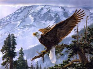 Eagle with open wings on the tree branch