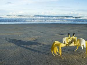 Yellow crab walking on sand