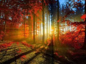 Sun rays passing through the trees