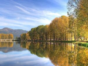 Trees reflected in the waters of a calm lake