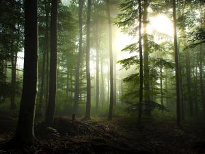 The thickets of the forest filtering the sunlight