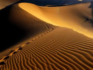 Footprints in the desert sand