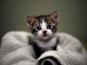 Kitten on a towel