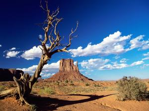 Arid desert in Arizona