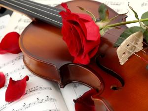 A violin and a rose