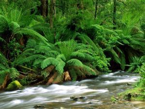 Abundant green vegetation to the bank of a river