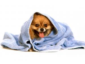 Doggy wrapped in a towel