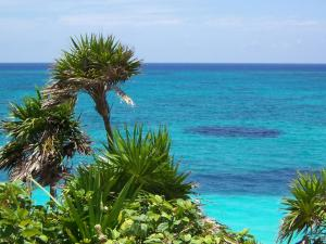 Palm trees front the blue sea