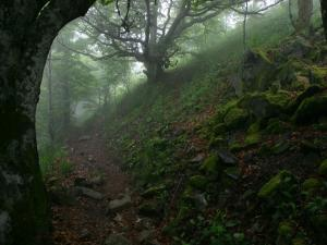 Royal forests (England)