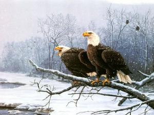 Pair of eagles near a snowy river