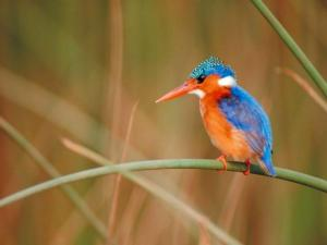 Colorful bird with long beak