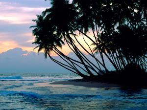 Palm trees on a beach in Colombo, Sri Lanka