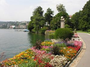 Flowers in the shore of Lake Lugano (Switzerland)