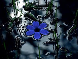Blue flower floating in a pond