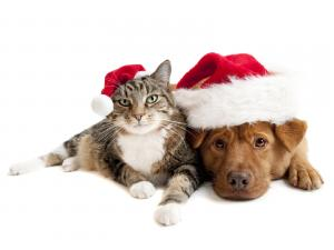 Cat and dog celebrating Christmas together