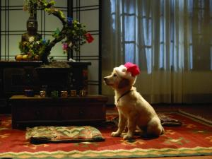 Dog waiting for Santa Claus