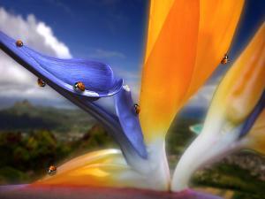 "A flower ""bird of paradise"" full of ladybugs"