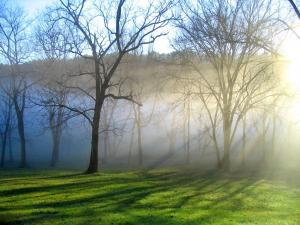 Fog covering the trees in winter